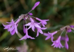 nice-flowers-11