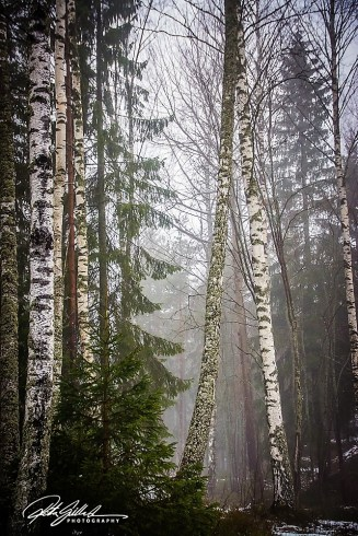 Misty afternoon (14)