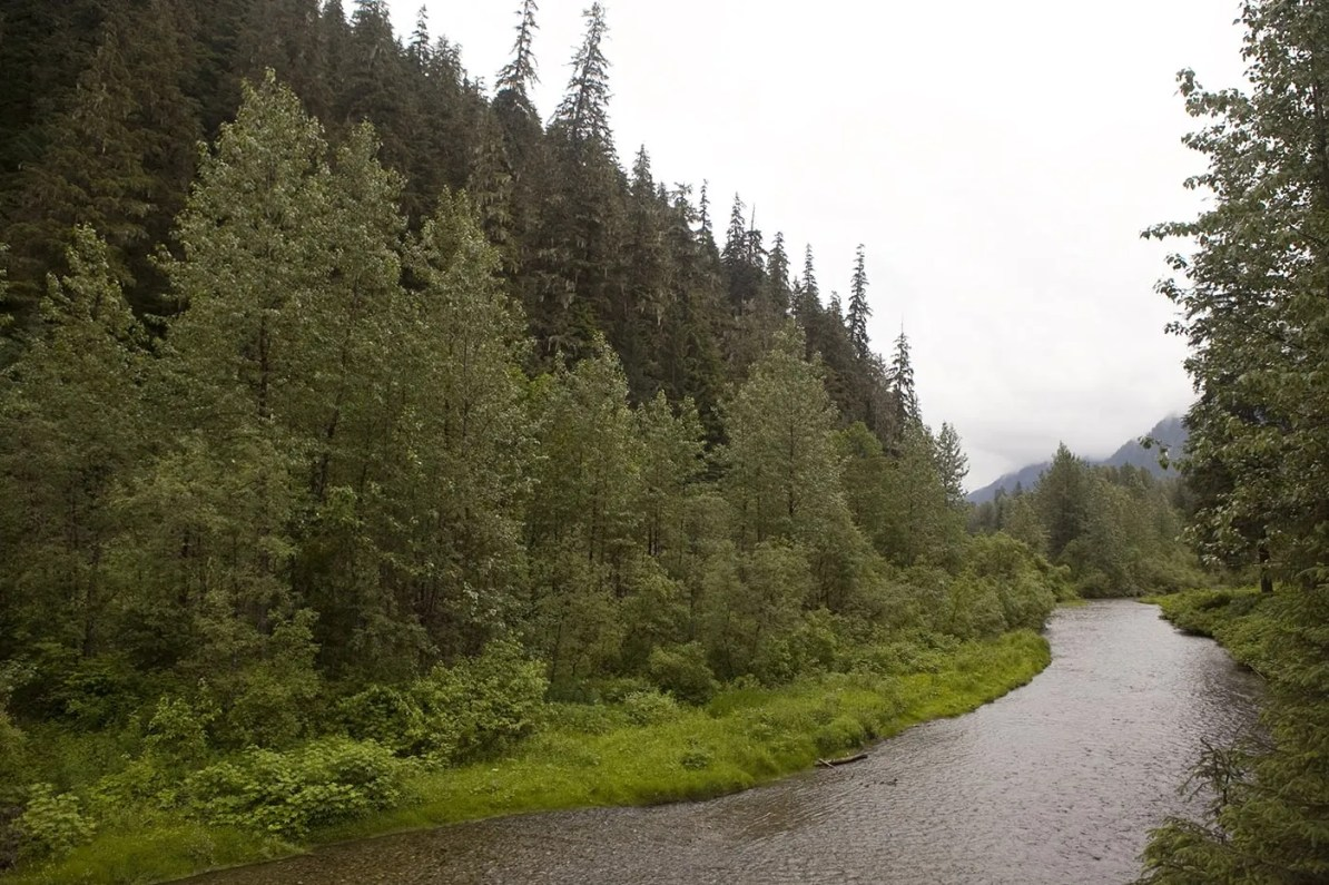 Fish Creek Wildlife Observation Site at the Tongass National Forest in Hyder, Alaska.