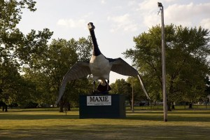 Maxie: The World's Largest Goose in Sumner, Missouri