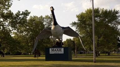Maxie: The World's Largest Goose in Sumner, Missouri