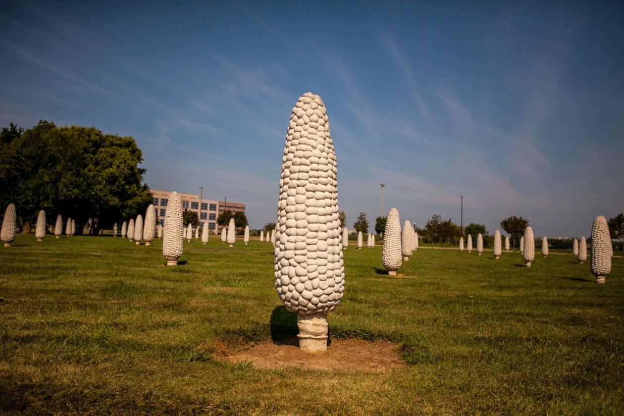 Field of Giant Corn Cobs in Dublin, Ohio