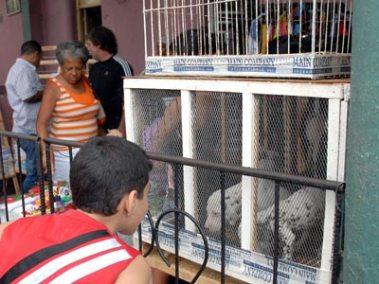 Un niño observa los perros de raza que venden trabajador cuenta propia en la avenida Carlos III, el 5 de Febrero de 2011, La Habana, Cuba. Foto: Calixto N. Llanes/Juventud Rebelde (CUBA)