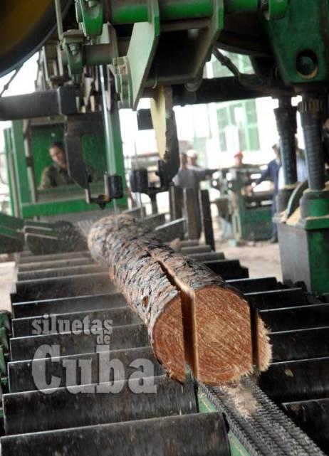 """Una sierra corta la madera en el Aserrío """"Combate Las Tenerías"""", el 14 de Enero de 2011, Pinar del Río, Cuba. Foto: Calixto N. Llanes/Juventud Rebelde (CUBA)"""
