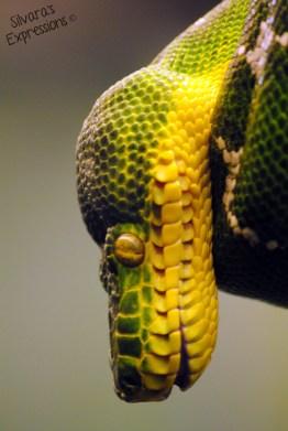 Toronto Zoo Reptile 006