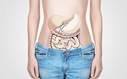 """Der Darm ist von einem sensiblen Geflecht aus Nervenzellen umgeben, das auch als """"Bauchhirn"""" bezeichnet wird."""