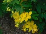FLOWERBYELL