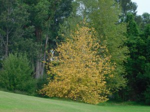 2 BEGA TREE YELLOW