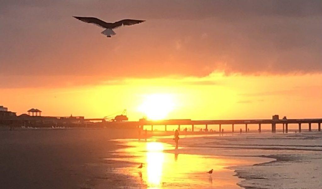 Folly Beach, South Carolina Sunrise Bald Eagle Ocean Beach
