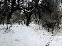 solstice park 047as