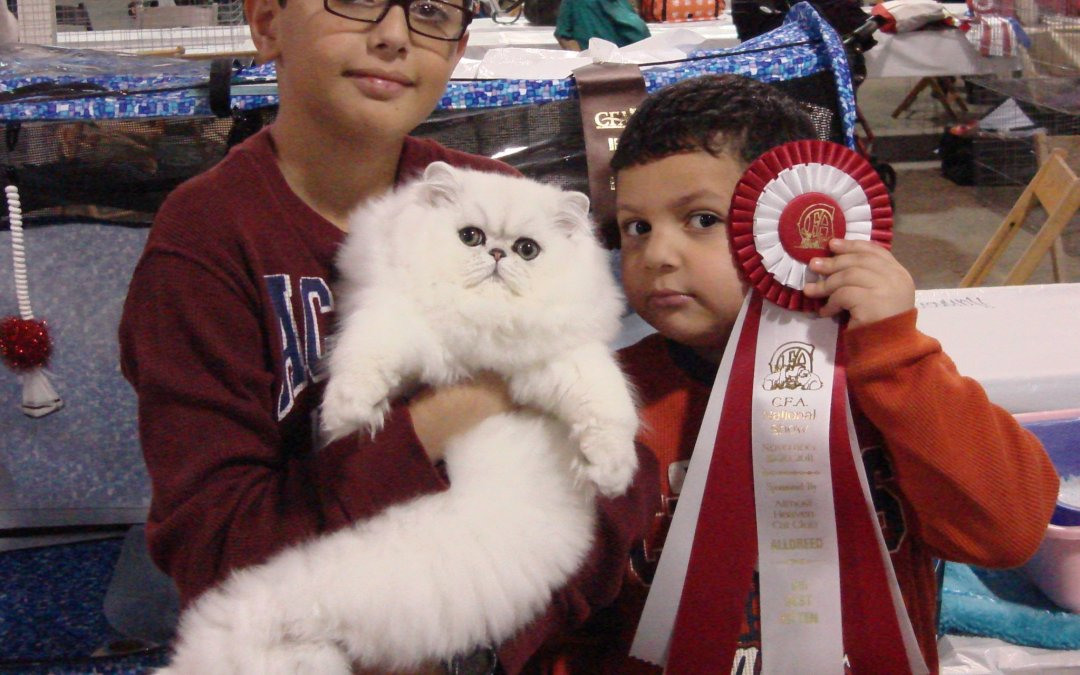 CFA National cat show 11/19-11/20/2011 Indianapolis