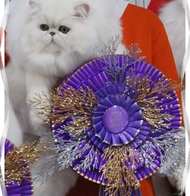 Dixieland Silver & Golden Fanciers cat show 12/10-12/11/2011 NC