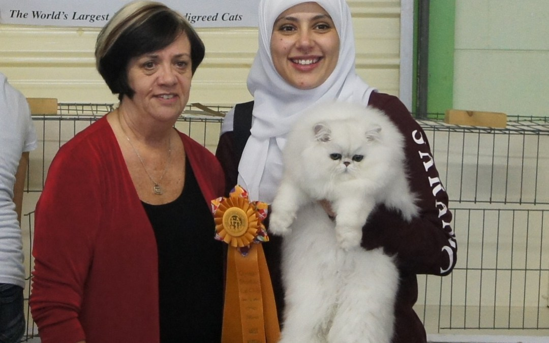 Highest scoring kitten of the show!!