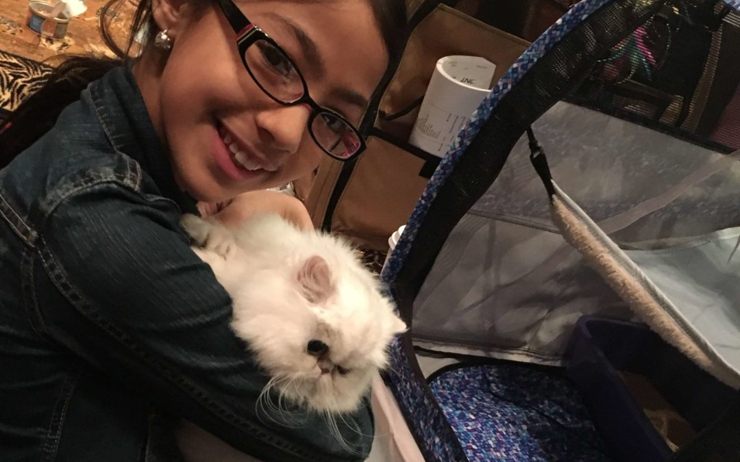 Champion Silverdonia Nour's first CFA cat show! Shaded silver Persian cat 2016 – IL