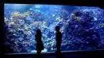 Aquarium 005