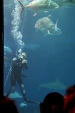 Aquarium 089