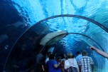Aquarium 125