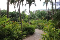 some of the gardens at the wailea (you walk through them to get just about anywhere, HUGE grounds
