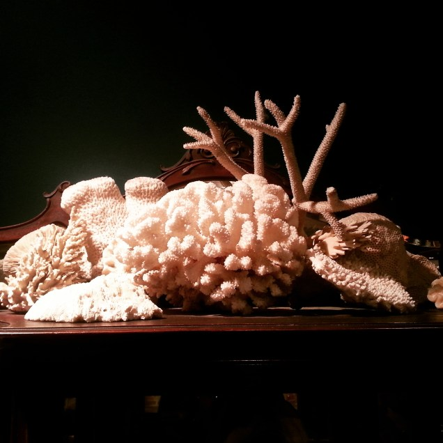 LIghtner Museum coral collection
