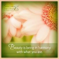 Beauty is being in harmony with what you are. ~Peter Nivio Zarlenga