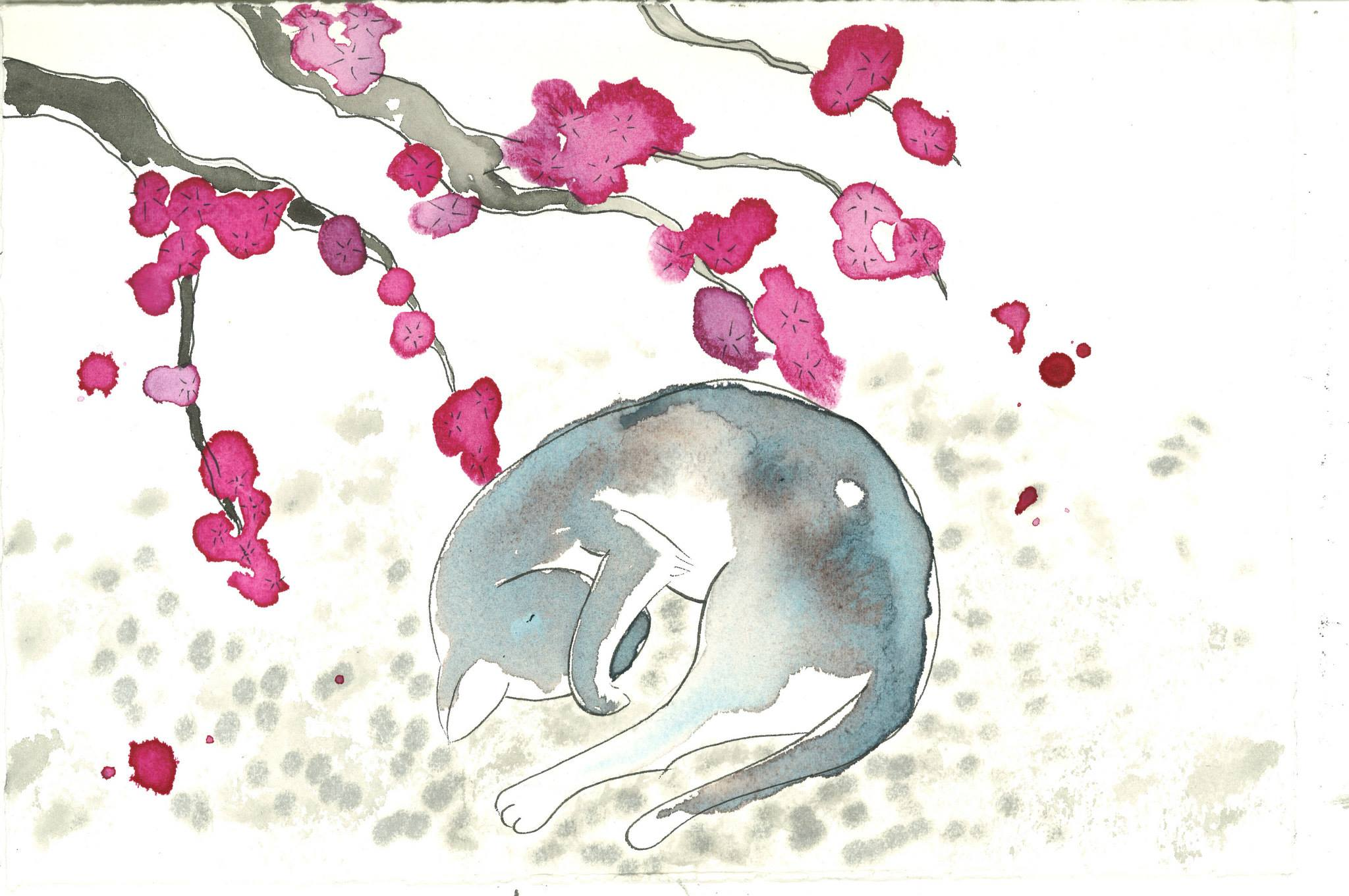 Cat & Cherry Blossom - Shirley Low, Edinburgh