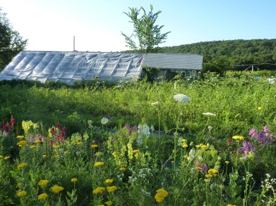 the greenhouse in summer