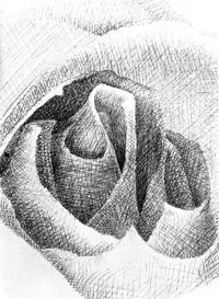 rosehatch