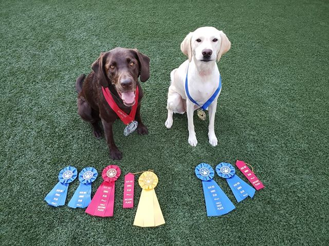 championship dogs