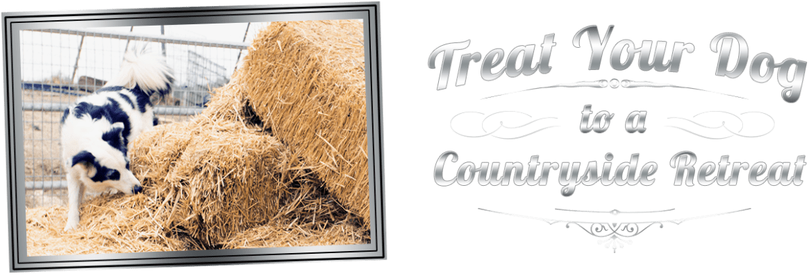Treat your dog to a country side retreat