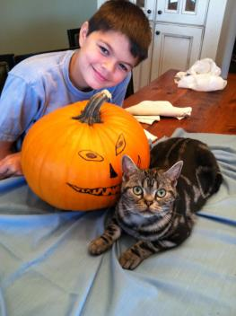 OP-Jackson-October-2012-Boy-smiles-while-American-Shorthair-silver-tabby-lies-down-beside-Halloween-pumpkin