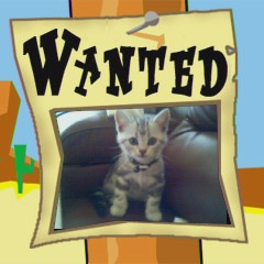 Image of American Shorthair silver tabby on wanted poster