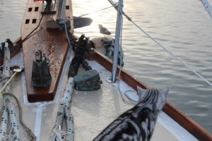 Image of the Sailor Cats looking over the side of the boat
