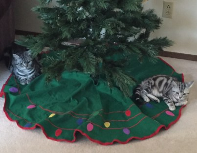 OP-Tommy-Sophie-silver-tabbies-under-christmas-tree-Dec-2017