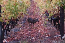 Visitor in the Vineyard