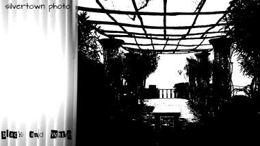 Crno i bijelo foto 26