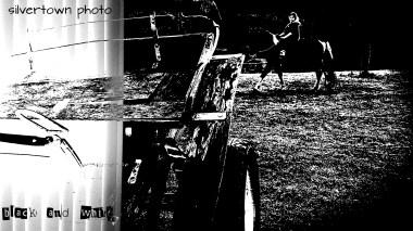 Crno i bijelo foto 7