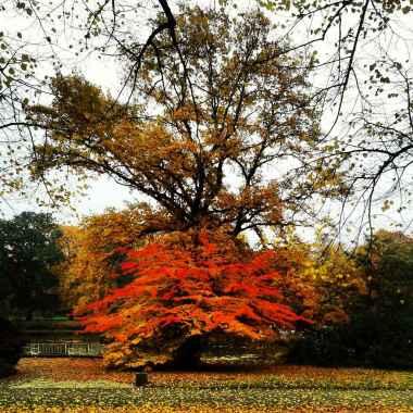 Tree - Silvertown Photo