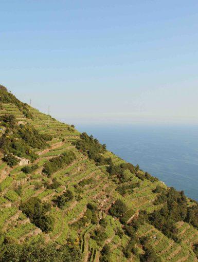 Cinque Terre winemaking