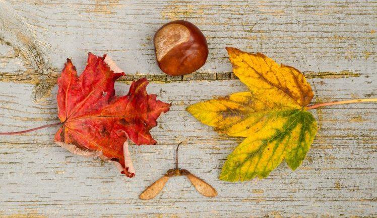 7 топли манджи за есента
