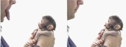 monkey see monkey do - study about monkeys
