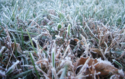 northern dew - photo by jeremy clarke