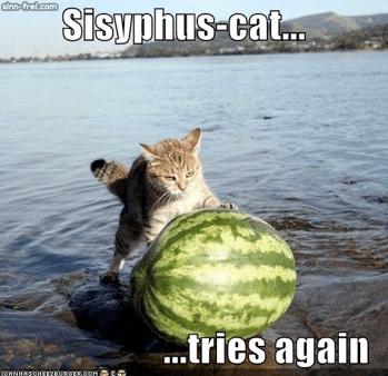 cat rolling watermelon