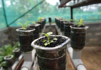 La desmaterialización de las plantas y los recursos genéticos: Una perspectiva campesina