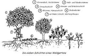 Jardinería forestal / Bosques Comestibles