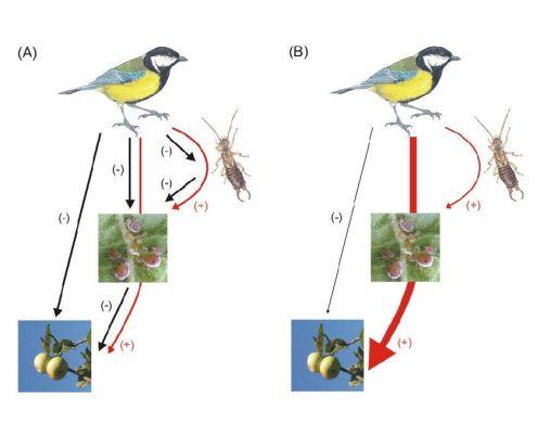 Control de plagas del manzano de sidra por aves silvestres