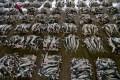 Depredador amenazado: 18 perturbadores imágenes sobre el comercio con aletas de tiburón