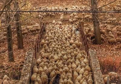 El pastoreo constituye una herramienta imprescindible contra el cambio climático
