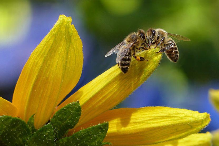 Virus troyano en las abejas