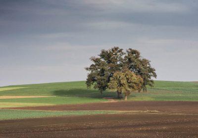 El calentamiento global aumentará la prevalencia de los patógenos en los suelos de todo el mundo