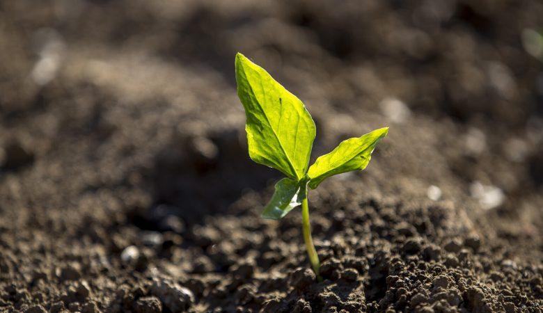 Así subvenciona la UE a los grandes terratenientes y olvida a los productores más verdes: un nuevo estudio lo demuestra